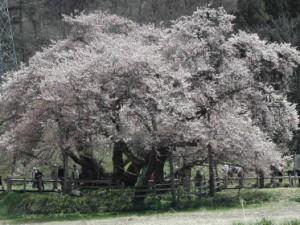 20080326-石部_1