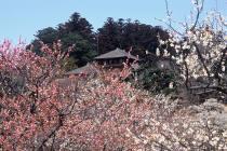 20080226-偕楽園_2