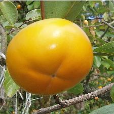 20071019-柿